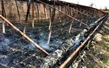 一场大火毁了六个苦瓜大棚.jpg