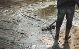 潍坊市植物园整治湖水质量,彻底清除淤泥.jpg