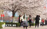 """花色潋滟迎春盛  樱花十里""""笑""""春风.jpg"""