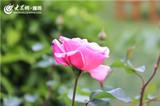IMG_3656_副本_副本.jpg