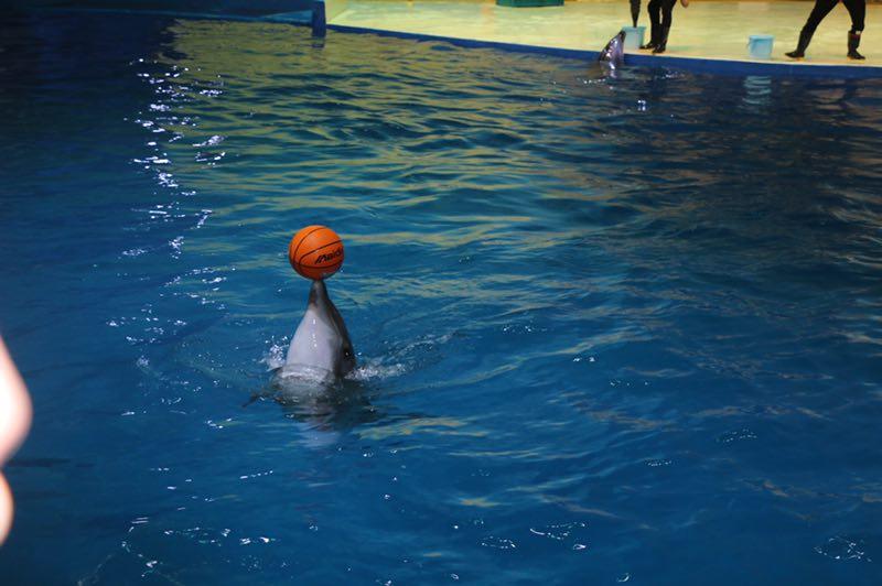游玩圣地 寿光极地海洋世界_热点聚焦_潍坊大众网